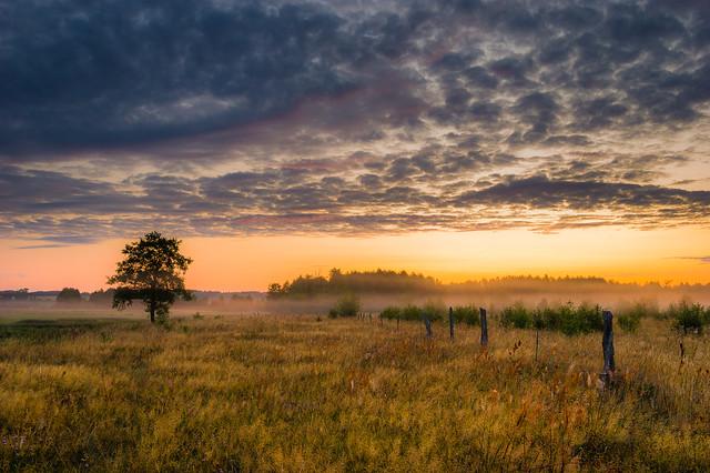 Water meadows at dawn