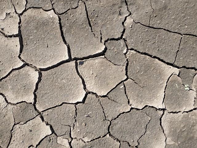 Brown cracked ground #texture 17
