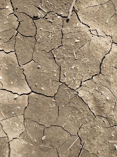 Brown cracked ground #texture 12