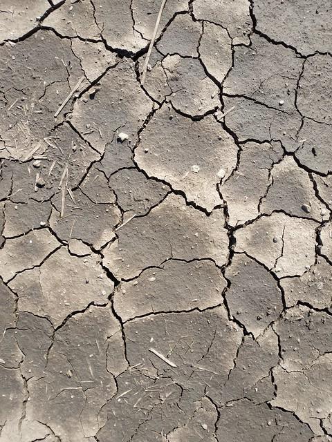 Brown cracked ground #texture 09