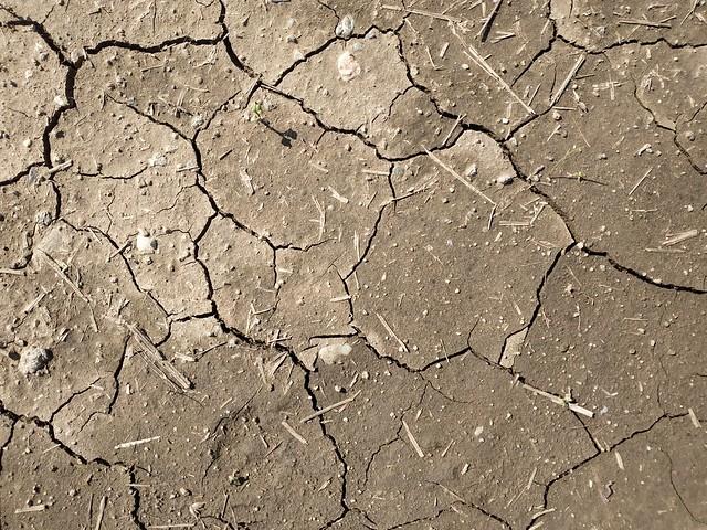 Brown cracked ground #texture 10
