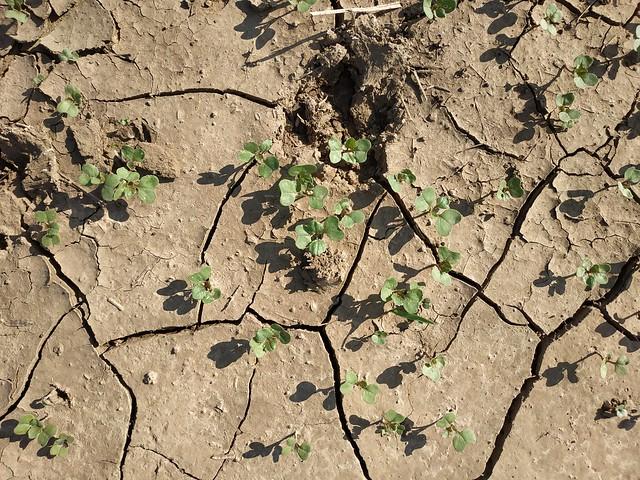 Brown cracked ground #texture 06