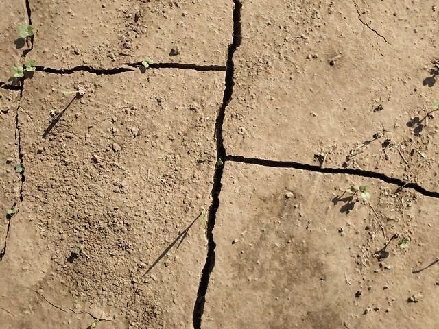 Brown cracked ground #texture 05