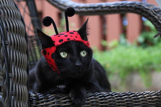 Ellie Belly Ladybug