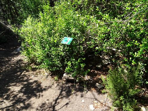Panneaux botaniques : Myrte