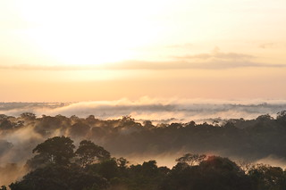 Amazon Rainforest_fog_sunrise