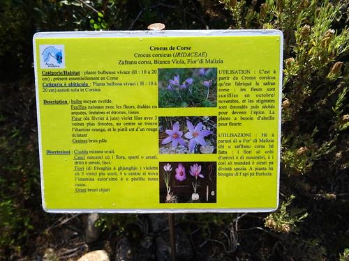 Panneaux botaniques : Crocus