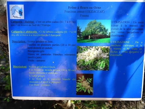 Panneaux botaniques : Frêne