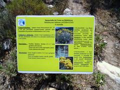 Panneaux botaniques : Immortelle de Corse