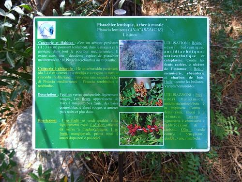 Panneaux botaniques : Pistachier lentisque