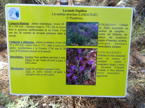 Panneaux botaniques : Lavande