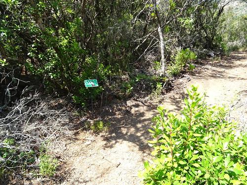 Panneaux botaniques : Arbousier