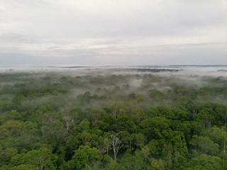 Amazon Rainforest_fog