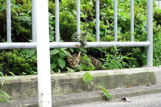 Today's Cat@2019-08-06