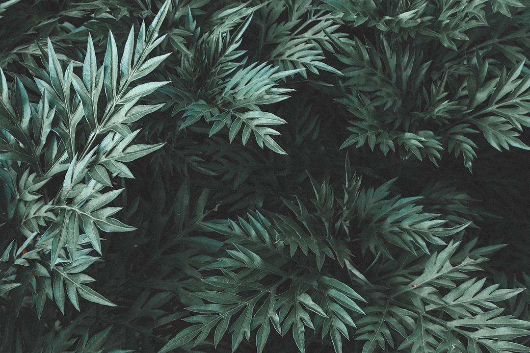 ภาพถ่ายธรรมชาติ แต่งด้วยพรีเซ็ตโทน Green Dark แอพ Lightroom