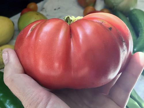 tomato IMG_1040b