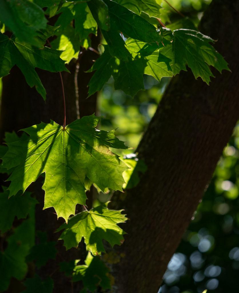 A travers les voiles du monde vert... 48472724251_dcca125c97_b
