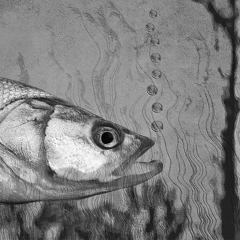 2019:218/365. Fish (still alive)