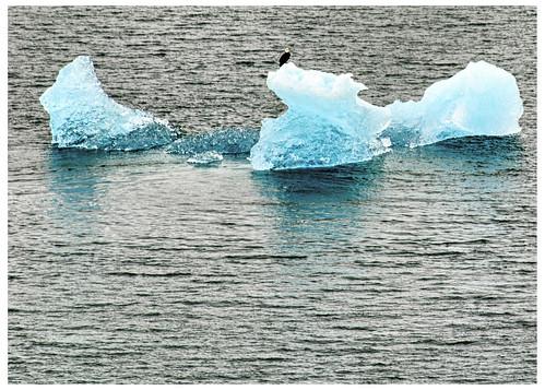 Eagle On An Alaskan Ocean Ice Floe near Juneau - 2007