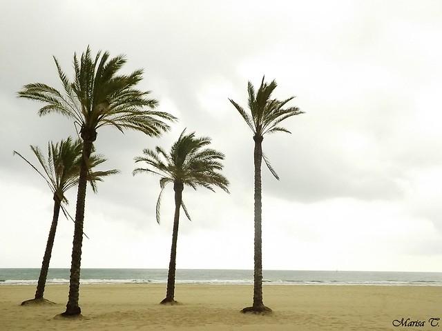 En Cullera (Valencia)