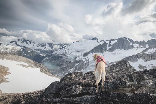 Summit dogs on Tricouni Peak