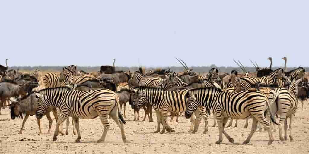 animaux-savane-africaine-partage