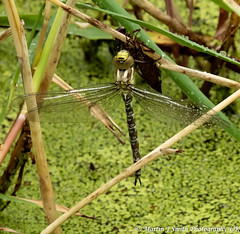 New dragonfly-05-08-2019