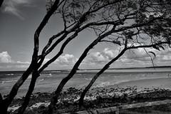 Dr Mays Island [Bundaberg]