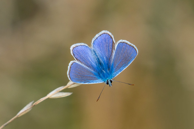 Blue......