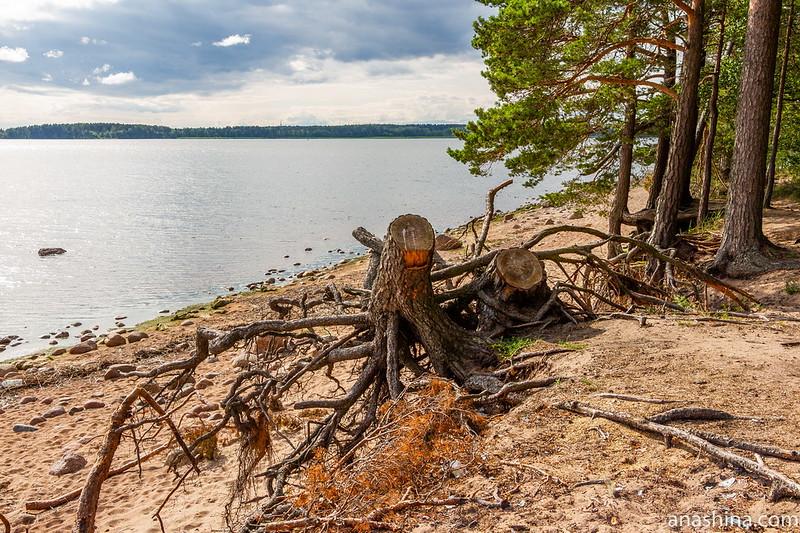 Бухта Ермиловская, Финский залив