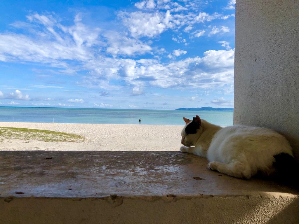竹富島のコンドイビーチで猫