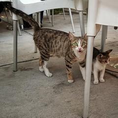 Ashgabat restaurant cats