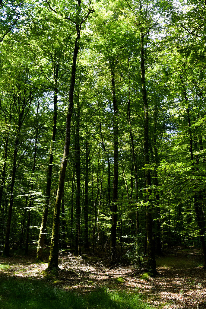 Villecartier Forest, Brittany