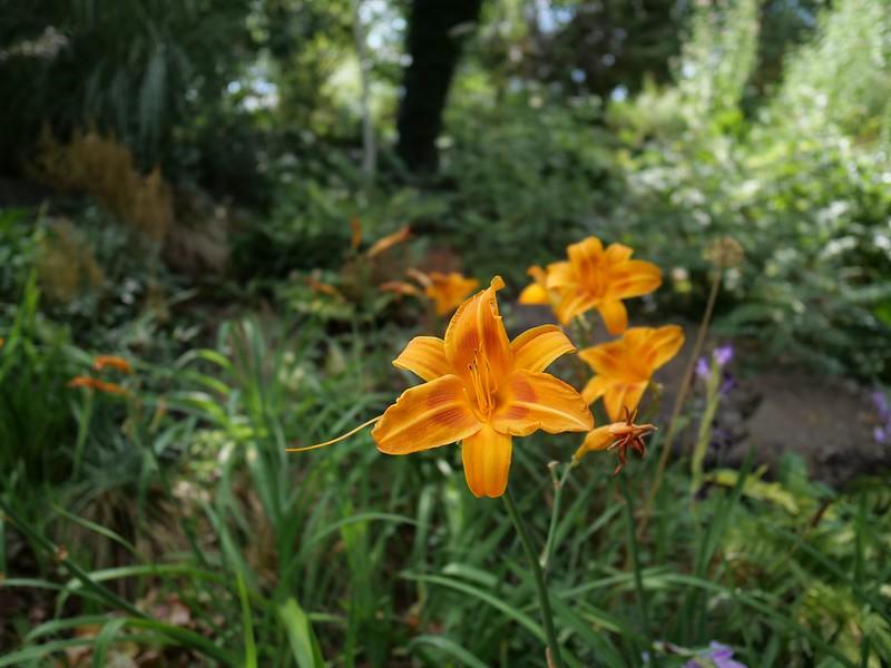 Jardin du Château de Chaumont 48479937087_1bae92ec5f_c