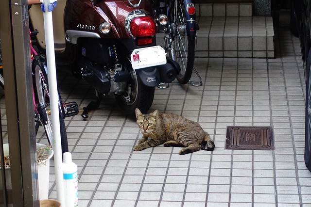 Today's Cat@2019-08-07