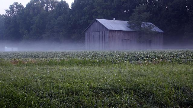 a little fog