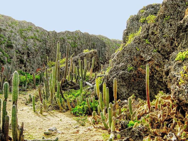 Hato - Curaçao