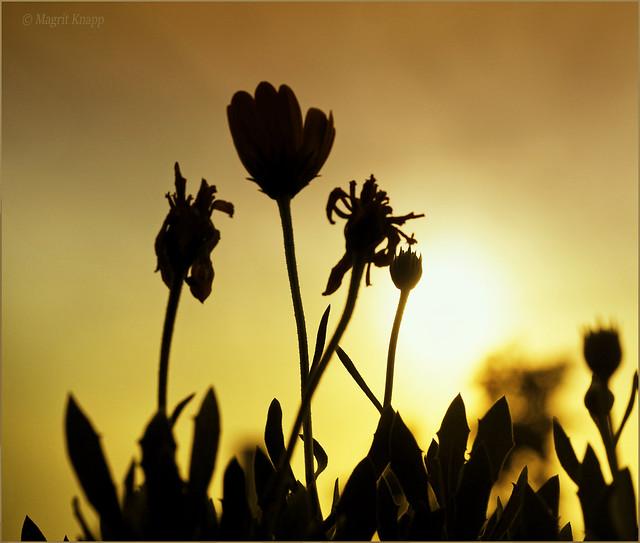 Gegen die Sonne