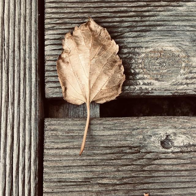 « Il n'y a plus de solitude là où il y a de la poésie. »
