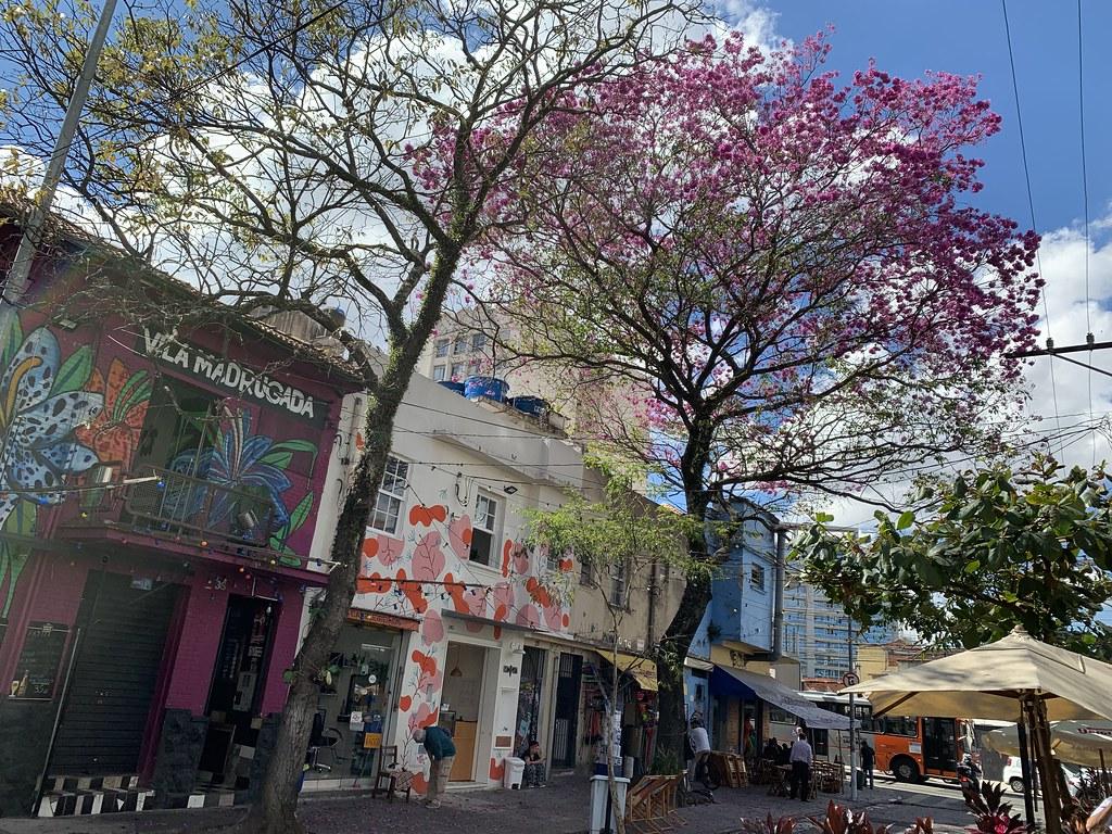 """I'll Survive"" , says the Ipê-Rosa, São Paulo (winter - 29ºC), Brazil."