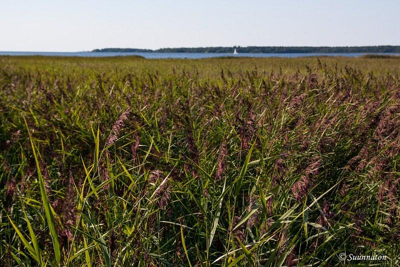 Kokkola, Harriniemi | Matkablogi Suunnaton