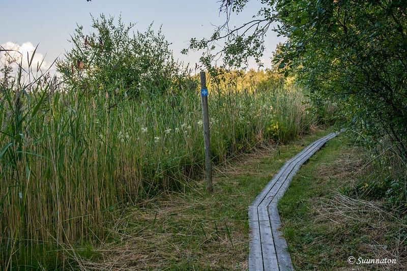 Kokkola, Harriniemen luontopolku | Matkablogi Suunnaton