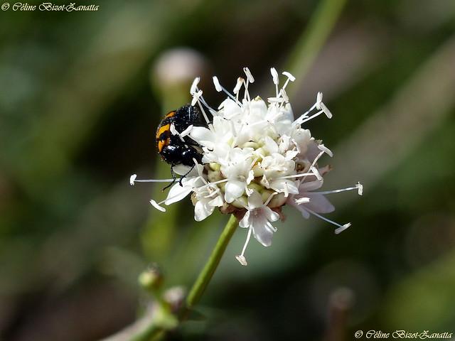 La faune et la flore du Rougier du sud Aveyronnais