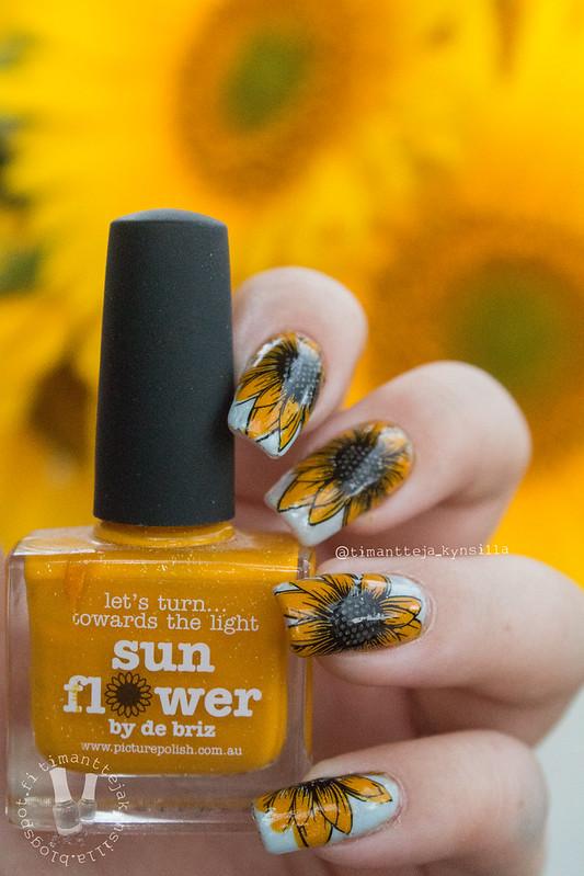 sunnflower