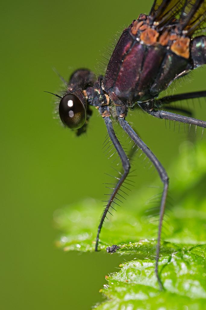 Macros/  proxi/  insectes  - Page 10 48483302576_5064a1e2ff_o