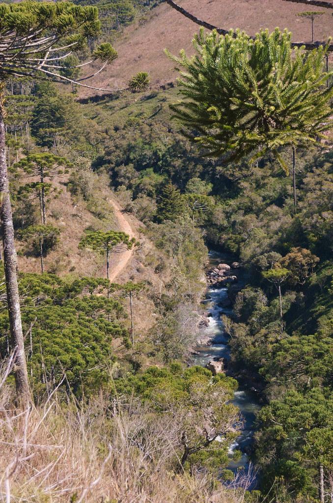 Rio Sapucaí and Araucárias at the Trilha do Rio Sapucaí