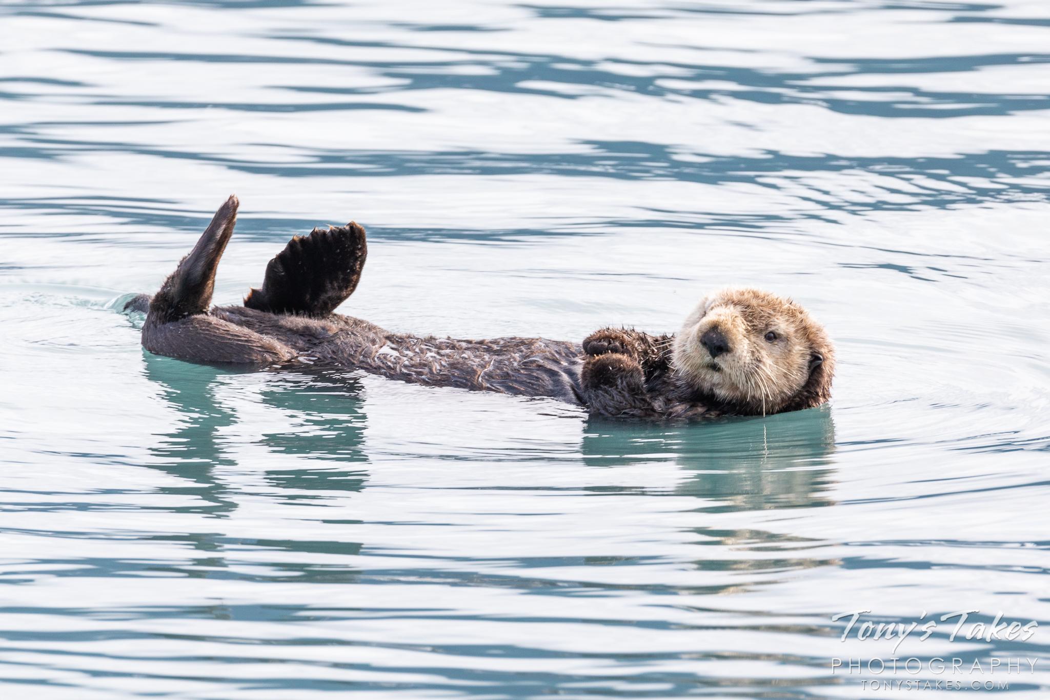 Sea otter brings smiles