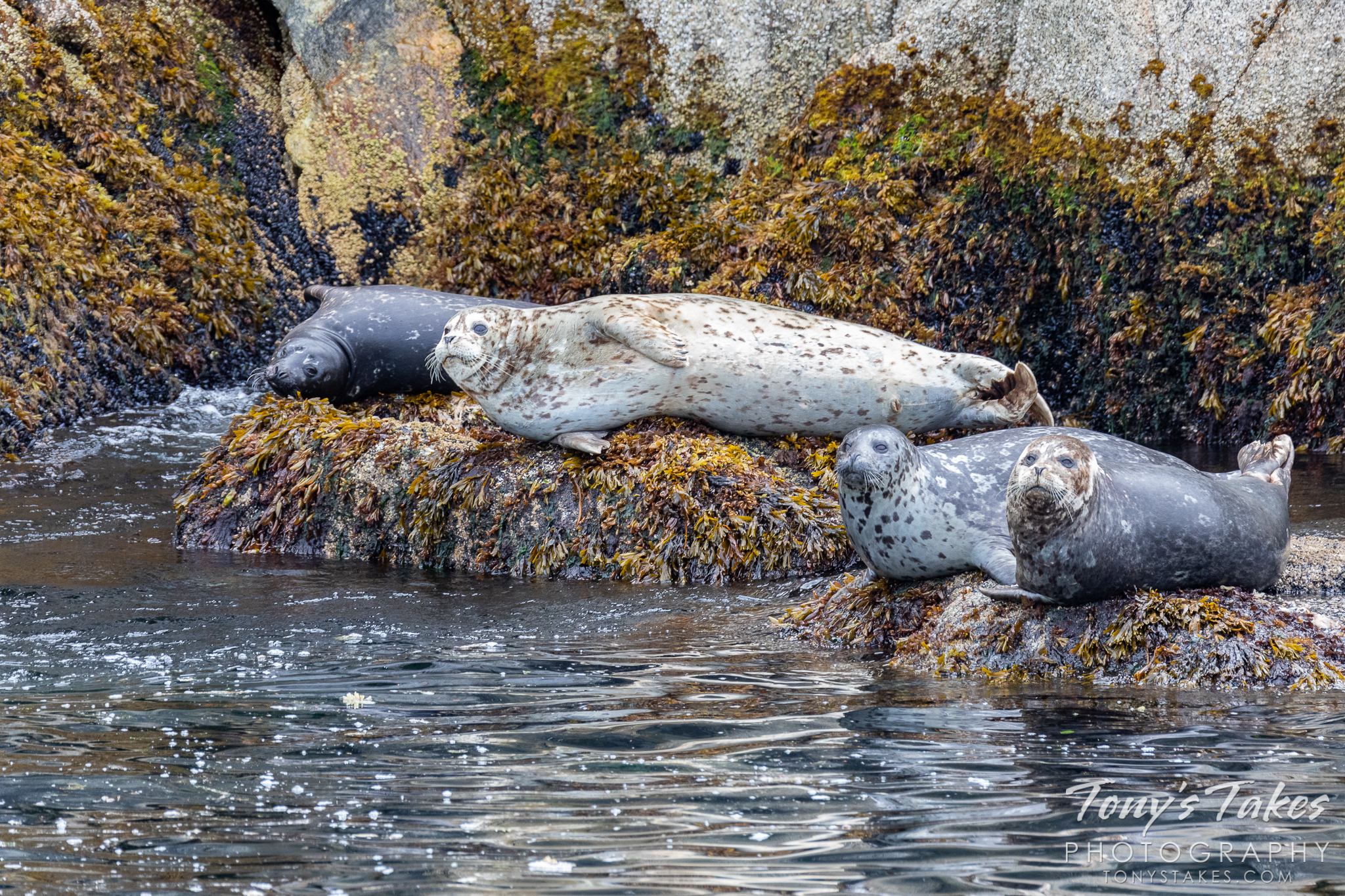 Sea lions enjoy a lazy day on the rocks