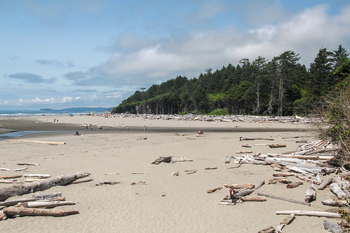 Driftwood and beachgoers - Explored