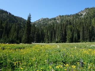 Escondido Lake Meadows